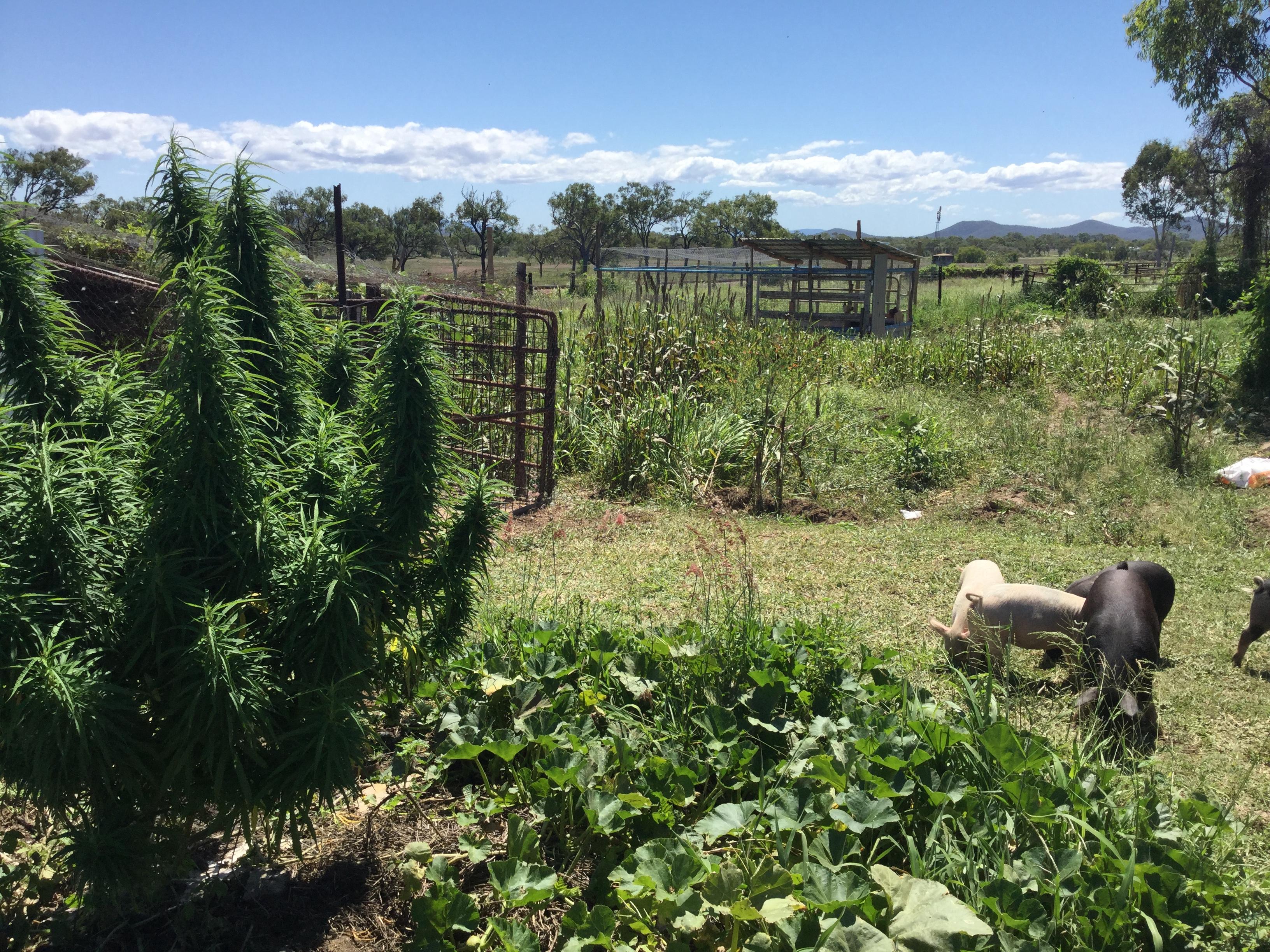 【大麻合法国一覧表付き】マリファナ(大麻)が世界的に合法化の流れだけど、身体への害について考えてみた